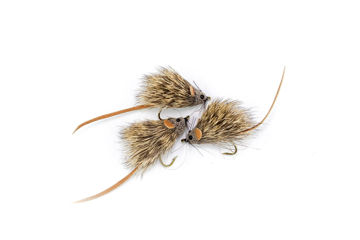 Picture of Mouse #6
