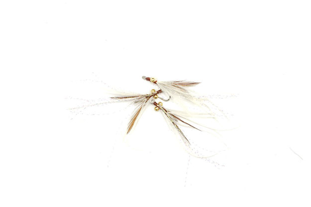 Picture of Abaco Shrimp #6