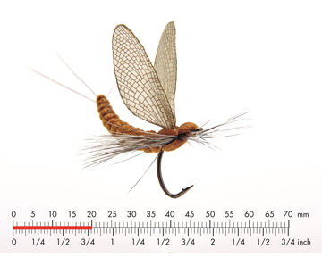 Picture of Mayfly Dun 2 Cinnamon Brown