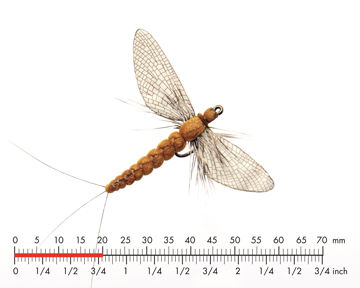 Picture of Mayfly Spent 2 Cinnamon Brown