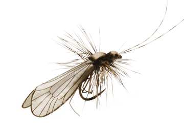 Immagine di Caddis Adult (Size 2)