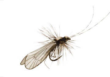 Immagine di Caddis Adult (Size 3)