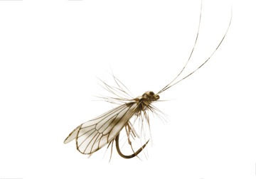 Immagine di Caddis Adult (Size 4)