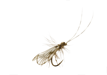 Immagine di Caddis Adult (Size 5)