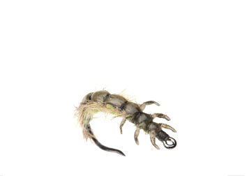 Picture of Caddis Larva (Size 3)