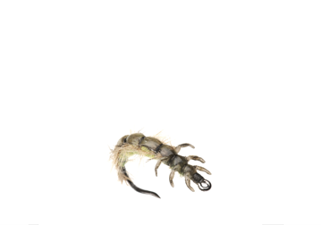 Picture of Caddis Larva (Size 4)