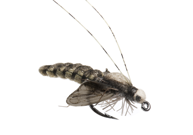 Picture of Caddis Pupa (Size 3)