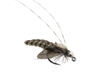 Picture of Caddis Pupa (Size 4)