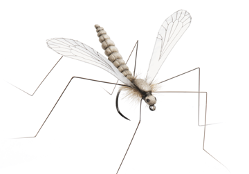 Picture of Cranefly (Size 1)