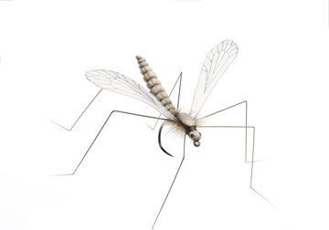 Picture of Cranefly (Size 2)