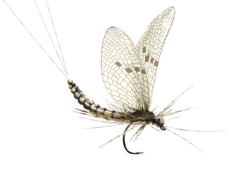 Picture of Mayfly Dun (Size 1)