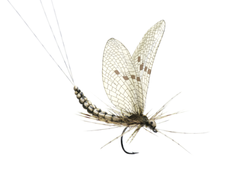Picture of Mayfly Dun (Size 2)