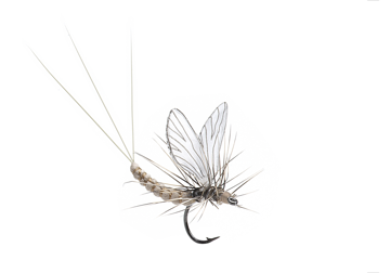 Picture of Mayfly Dun (Size 4)