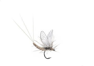Picture of Mayfly Dun (Size 5)