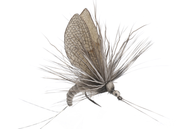 Immagine di Mayfly Emerger (Size 1)