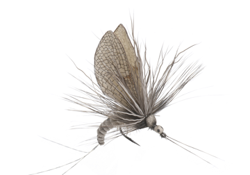 Immagine di Mayfly Emerger (Size 2)