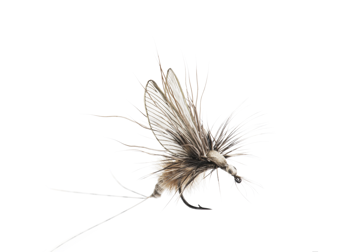Immagine di Mayfly Emerger (Size 4)