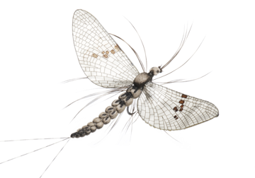 Picture of Mayfly Spent (Size 1)