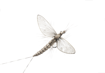 Picture of Mayfly Spent (Size 3)