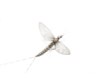 Picture of Mayfly Spent (Size 4)