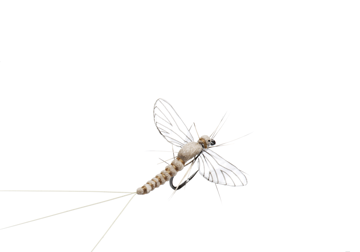 Picture of Mayfly Spent (Size 5)