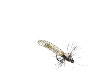 Picture of Stonefly Adult (Size 5)