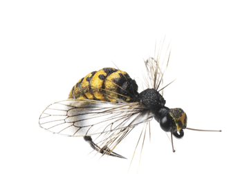 Picture of Wasp (Size 2)
