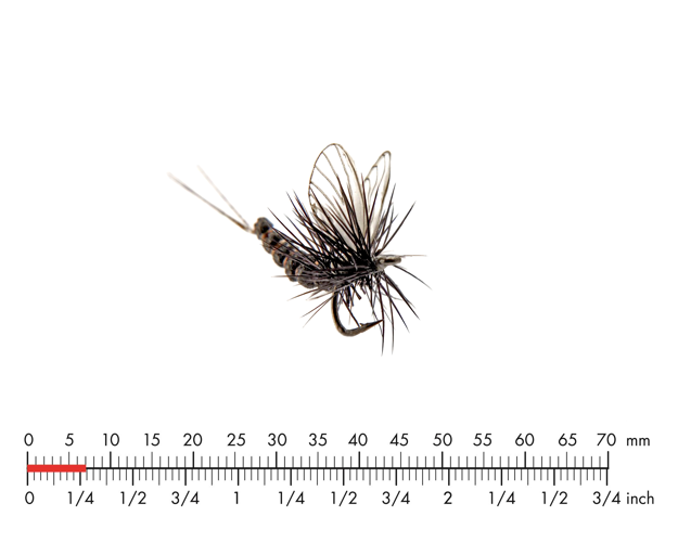 Picture of Mayfly Dun 5 Black