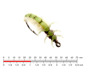 Immagine di Caddis Larva 1 Green