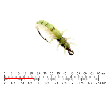 Immagine di Caddis Larva 2 Green