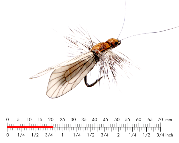 Picture of Caddis Adult 2 Cinnamon Brown
